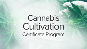 Cannabis Cultivation Certificate Program