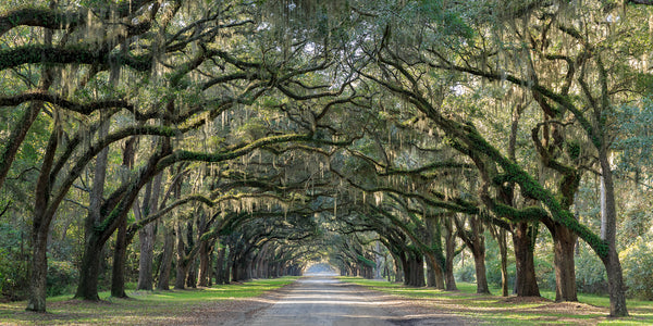 Wormsloe Plantation by Jim Guerard
