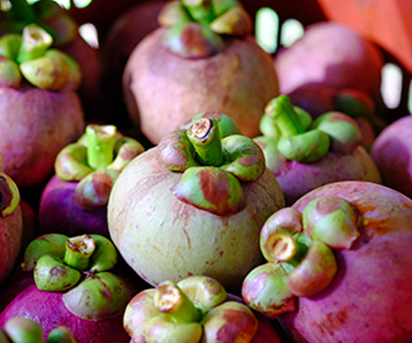 MANGOSTEEN FRUIT EXTRACT