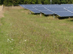 Seed mixes for solar sites