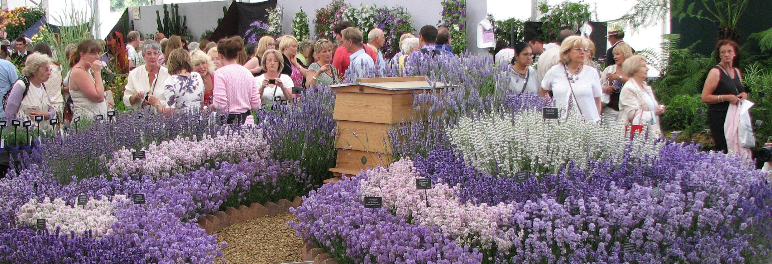 Floral Marquee, Hampton Court show