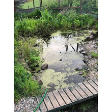 Load image into Gallery viewer, Preplanted coir mats in garden pond