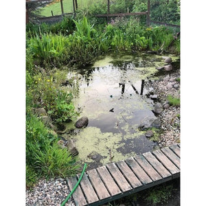 Preplanted coir mats in garden pond