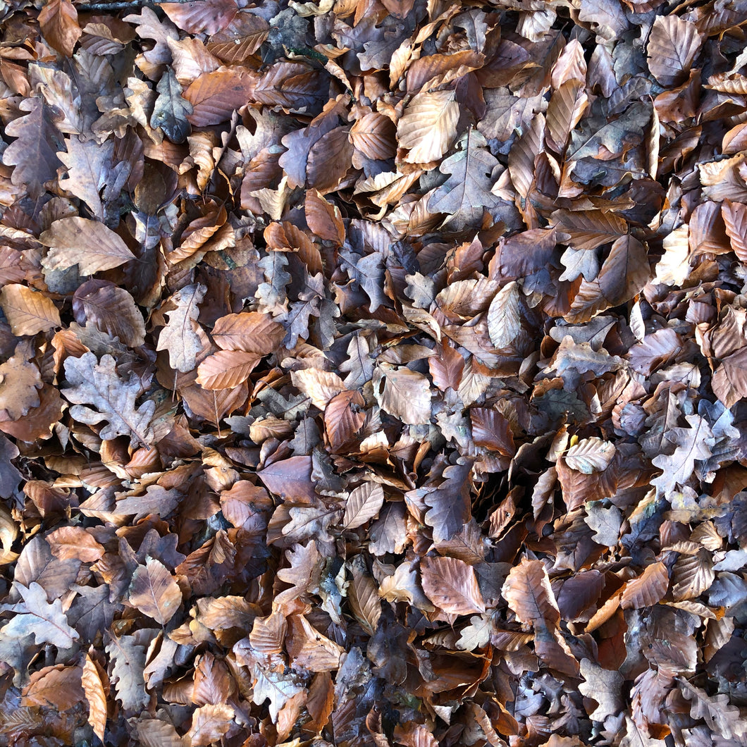 Mixed woodland leaves