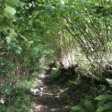Load image into Gallery viewer, Coppiced and laid hazel along ancient path, Vale of Ewyas