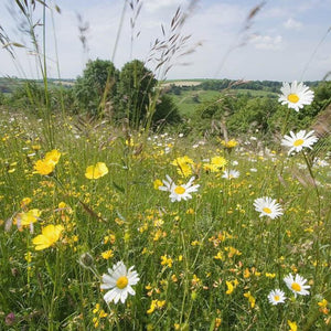 North Somerset Meadow mix