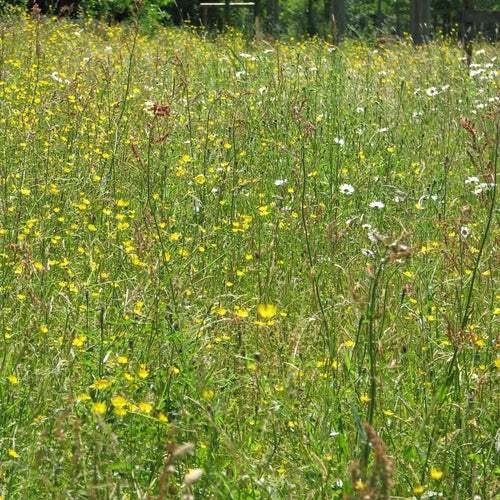 Premium wildflower meadow seed mix