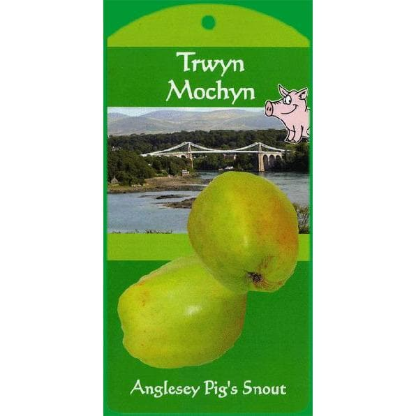 Apple Tree - Anglesey Pig's Snout