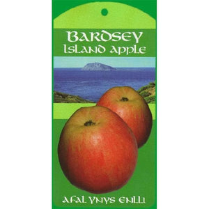 Apple Tree - Bardsey Island