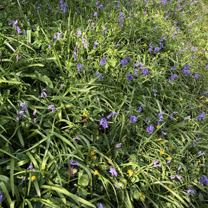Woodland edge seed mix