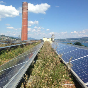 Wildflowers for biosolar roofs