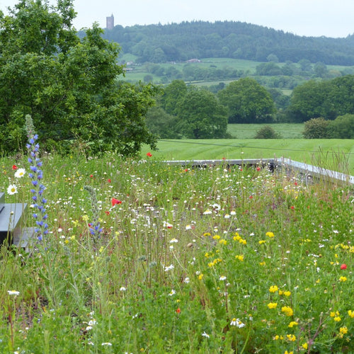 Wildflowers for green roofs