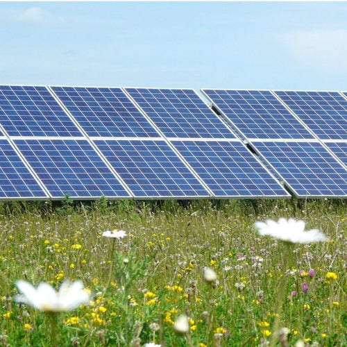 Solar Farm Meadow mix