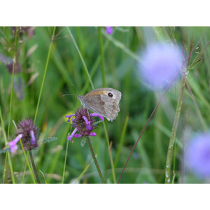 Clay Soil Wildflower Meadow Seed Mix