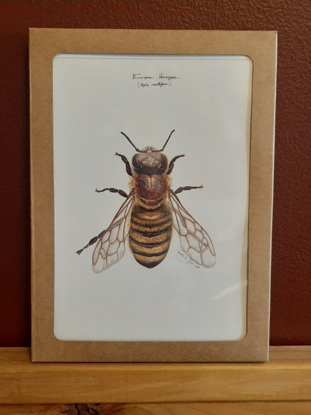 Box 6 pack - European Honeybee (A7)