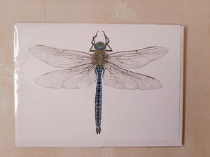 8 pack - Blue Dragonfly Stationary (A7)