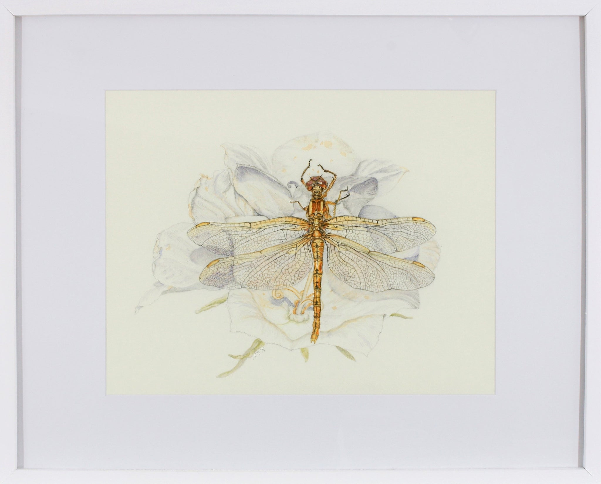 Gold Dragonfly on Flower in White Frame