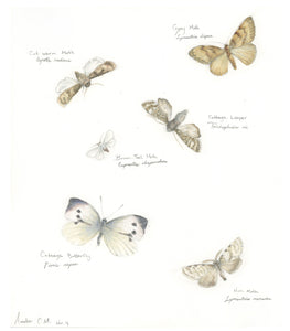 8 pack - Moth & Butterfly Note Cards (A2)