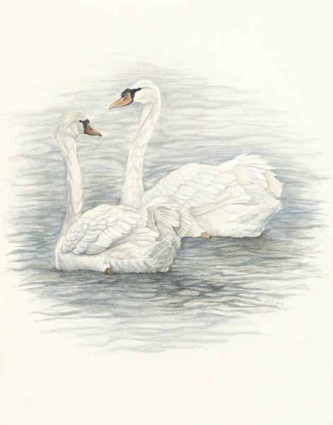 Watercolor Swans