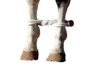 Martin Saddlery Western Tack Training Horse Rope Hobble