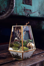 Load image into Gallery viewer, Gold Terrarium (Large)