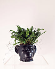 Load image into Gallery viewer, Fern Chimp
