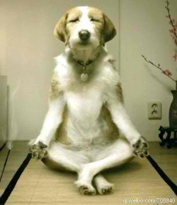 5 BENEFITS OF DOGA FOR YOU AND YOUR DOG