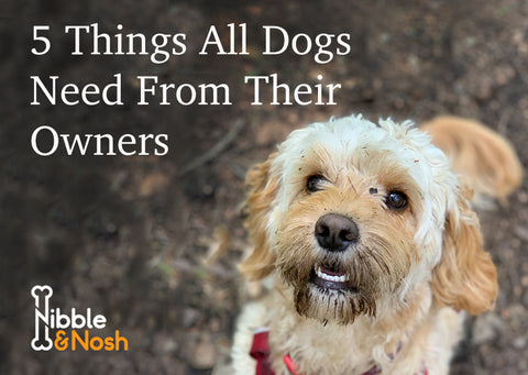 Five things all dogs need from their owners