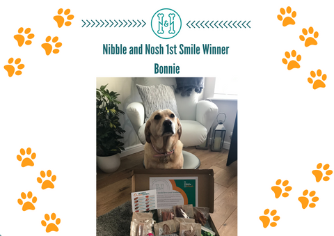Nibble_and _Nosh_Smile_Dog_Photo_Competition_Winner_Bonnie