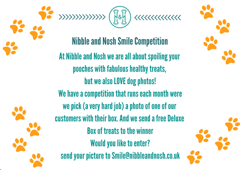 Nibble_and_Nosh_Smile_Dog_Photo_Competition_Intro