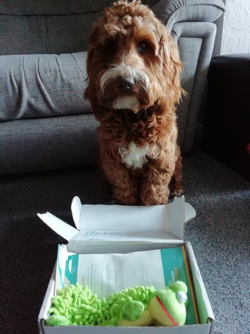 Opened gourmet lite plus dog treat box with a dog sitting behind it.
