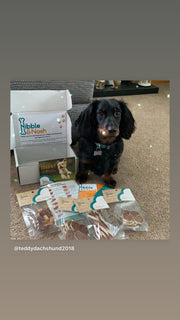 Another cute dog sat with all their treats from the lite plus gourmet dog treat box