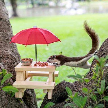 Squirrel Feeder Picnic Table with Umbrella on a Tree enjoyed by Squirrel