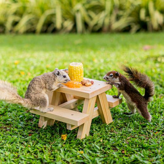Squirrel Feeder Picnic Table with DIY set up Corn Cob on Grass