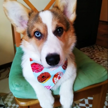 Load image into Gallery viewer, Donut Dog Bandana