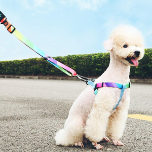 Rainbow Leash