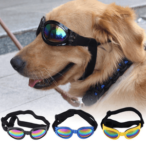 Doggy Shades