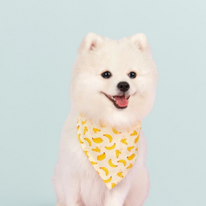 Banana Dog Bandana