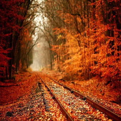 Autumn Yellow Fallen Leaves Forest  Railway Backdrop for Photography F-168