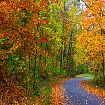 Autumn Backdrop Yellow Fallen Leaves Forest Road Backdrop for Photography F-176