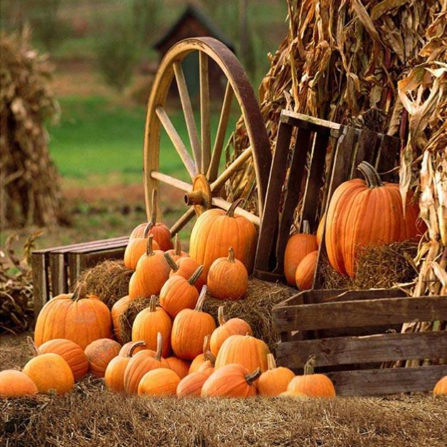 Autumn Farm Pumpkin Backdrops for Party Photography G-027