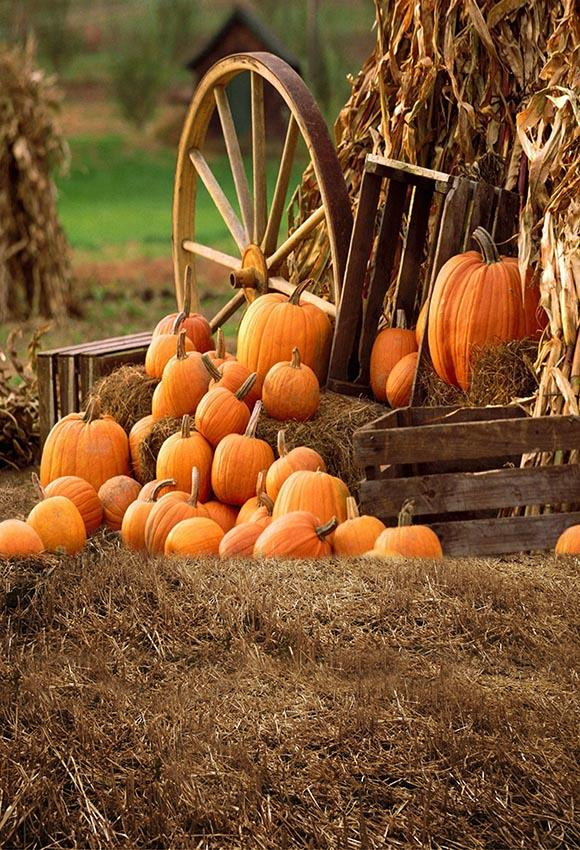 Road Backdrops Autumn Backdrops Pumpkin Background G-027