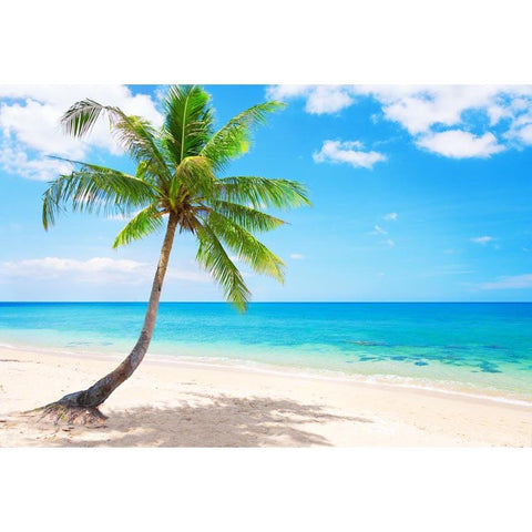 Coconut Tree Beaches Ocean Photo Backdrops  G-588