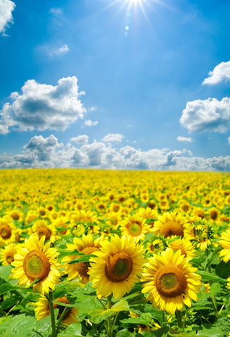 Sunflowers White Clouds Blue Sky Photography Backdrop GA-49
