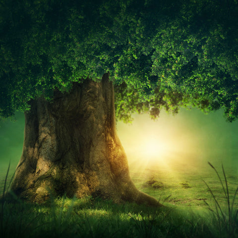 Forest Tree Sunlight Backdrops  for Photo Studio G-487