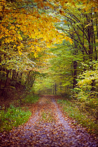 Autumn Yelllow Leaves Forest Landscape Road Backdrop for Photo Studio MR-2136
