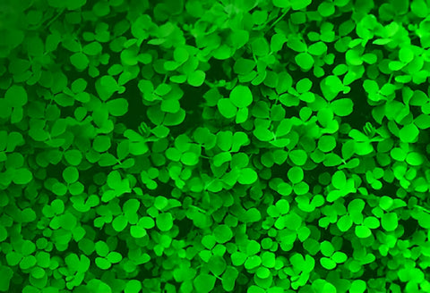 St. Patrick's Day Green Clover Leaf Backdrop for Party Photography SH196