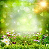 Spring Scenery Colorful Flowers Green Backdrop for Photography SH204