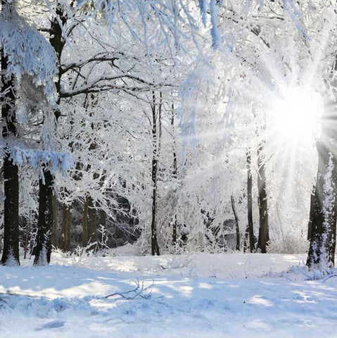 Winter Snow Forest Sunshine Backdrop for Photography ST-510