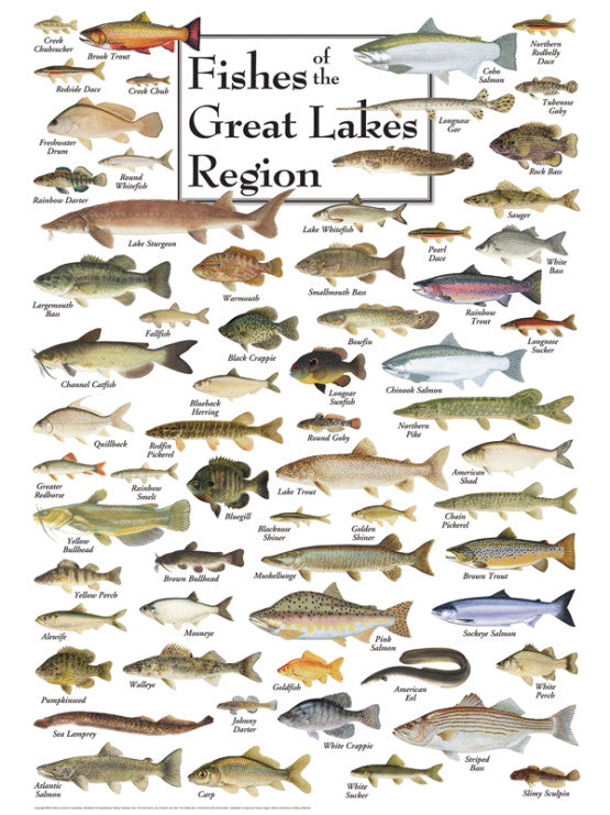 Fishes of the Great Lakes